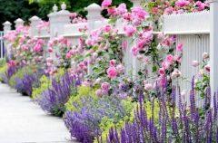 паркан - 14 2 240x158 - Огородження й рослини: що посадити вздовж паркану?