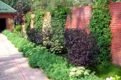 паркан - 16 1 240x158 - Огородження й рослини: що посадити вздовж паркану?