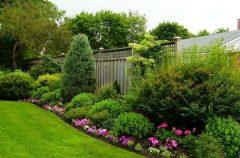 паркан - 6 2 240x158 - Огородження й рослини: що посадити вздовж паркану?
