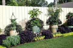 паркан - 7 2 240x158 - Огородження й рослини: що посадити вздовж паркану?