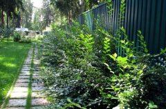 паркан - 8 2 240x158 - Огородження й рослини: що посадити вздовж паркану?