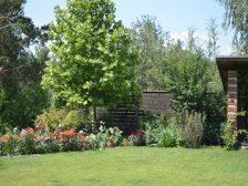 забор - DSC 0235 1 224x168 - Ограждения и растения: что посадить вдоль забора?
