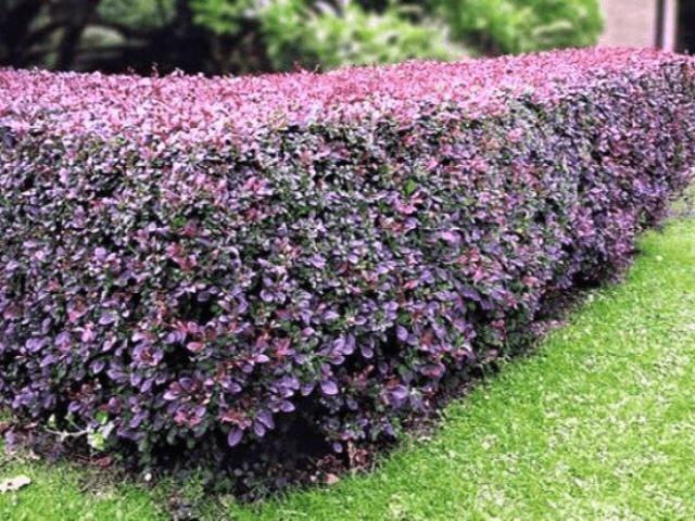 растения возле забора